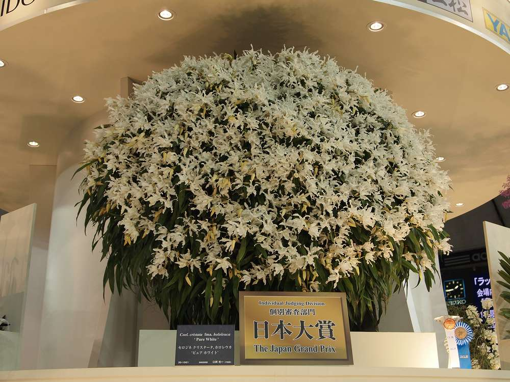 11.02.19撮影 世界らん展:日本大賞