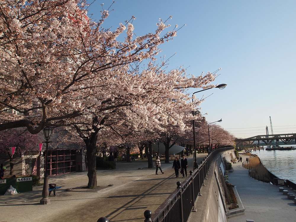 11.04.06撮影 墨田川沿いの桜並木